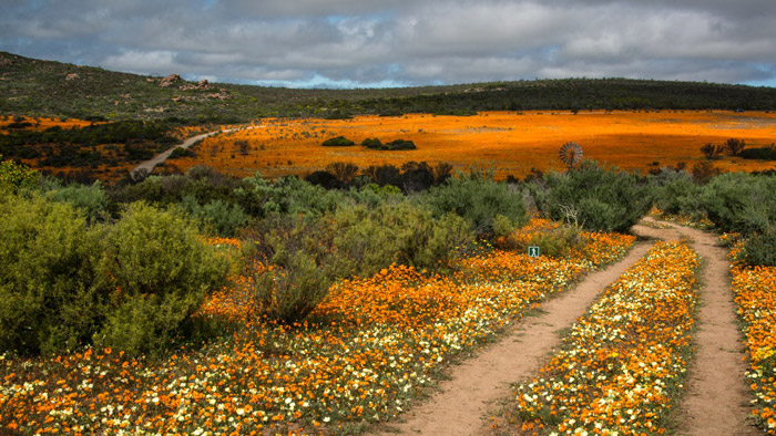 spring-in-south-africa