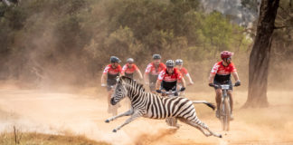 The wildlife of the Plettenberg Bay Game Reserve once again put on a show for the BUCO Dr Evil Classic riders. Photo by Oakpics.com.